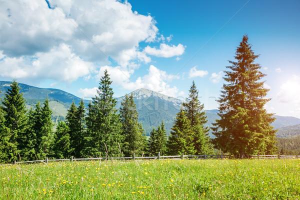 Mooie zomer landschap fantastisch dag plaats Stockfoto © Leonidtit