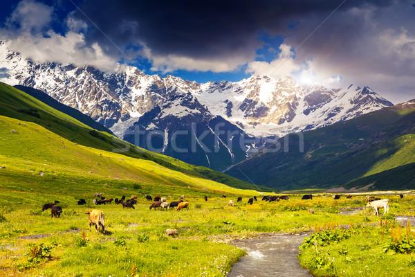alp Stock photo © Leonidtit