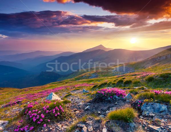 Virág mágikus rózsaszín virágok nyár hegy Stock fotó © Leonidtit