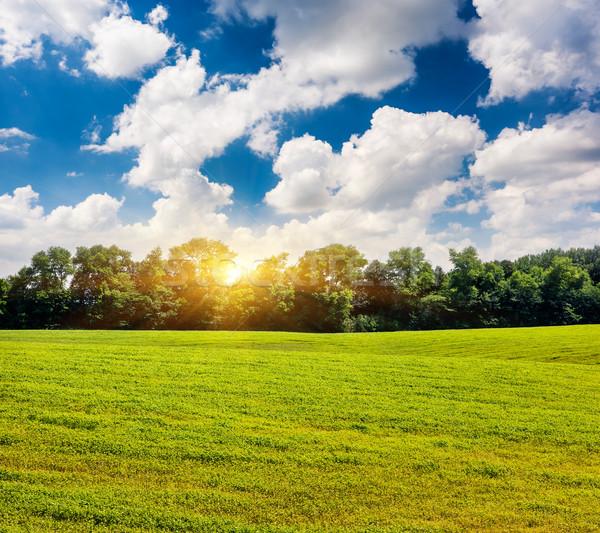 Mező gyönyörű kilátás vidéki táj kék ég Ukrajna Stock fotó © Leonidtit