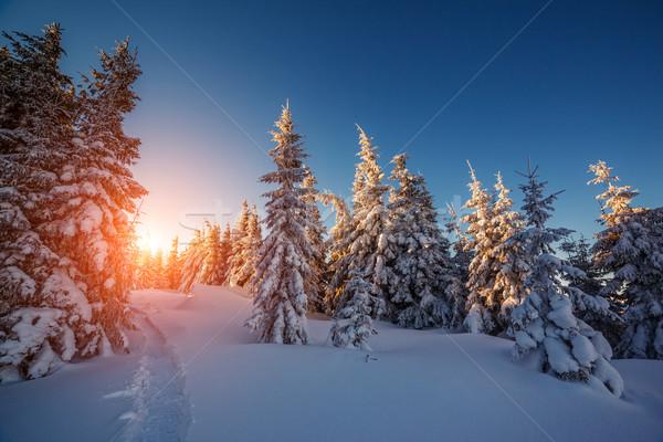 Tél tájkép izzó napfény fenséges reggel Stock fotó © Leonidtit