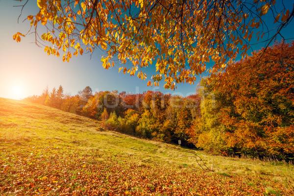秋天 景觀 樹 晴朗 山 商業照片 © Leonidtit