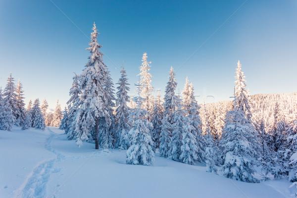 Fantastique paysage majestueux hiver Photo stock © Leonidtit
