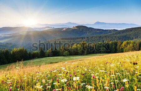Nyár gyönyörű napos idő hegy tájkép Ukrajna Stock fotó © Leonidtit