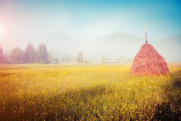 Stockfoto: Mooie · zomer · veld · fantastisch · dag · vers