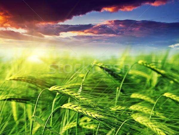 области пейзаж рассвет небе трава Сток-фото © Leonidtit