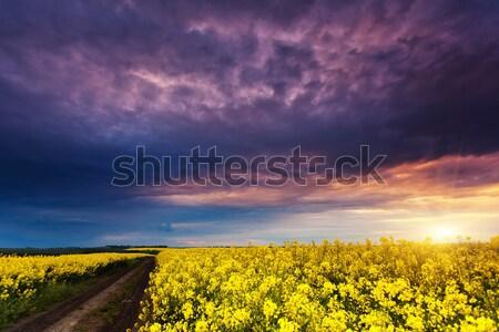 Foto stock: Pradera · fantástico · campo · dramático · cielo · oscuro