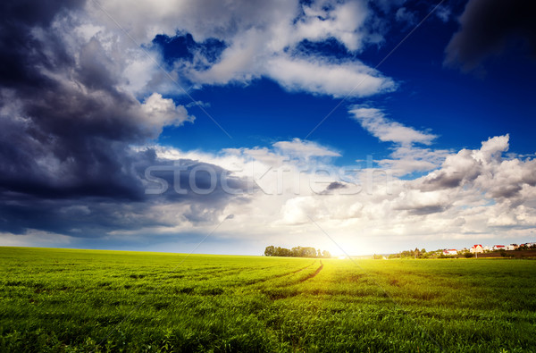 Domaine fantastique vert dramatique ciel Ukraine Photo stock © Leonidtit