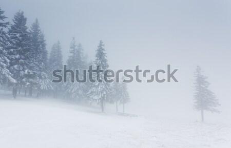 зима красивой пейзаж снега покрытый деревья Сток-фото © Leonidtit