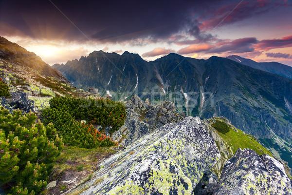 Gyönyörű kilátás hegy tájkép park magas Stock fotó © Leonidtit