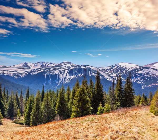 Dağ fantastik manzara park Ukrayna Stok fotoğraf © Leonidtit