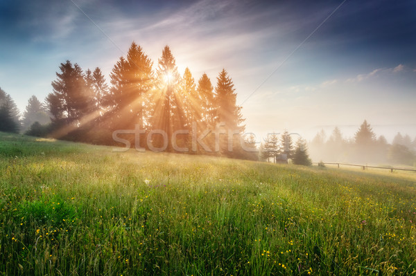 Fantastique été scène jour floraison collines Photo stock © Leonidtit