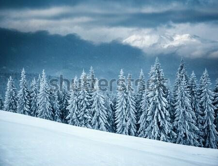 winter Stock photo © Leonidtit