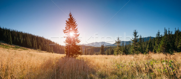 Fantasztikus nyár jelenet kilátás magányos fa Stock fotó © Leonidtit