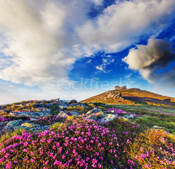 Fleur magie rose fleurs été montagne Photo stock © Leonidtit