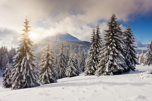 Foto stock: Inverno · pôr · do · sol · montanhas · céu · árvore