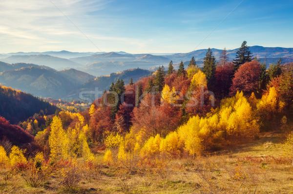 Autunno panorama alberi sereno montagna Foto d'archivio © Leonidtit