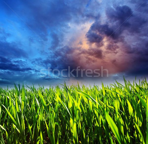 трава драматический небе Storm темно зловещий Сток-фото © Leonidtit
