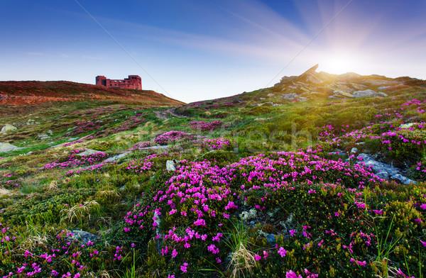 Virág mágikus rózsaszín virágok nyár tavasz Stock fotó © Leonidtit