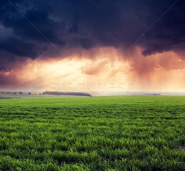 Mező fantasztikus zöld drámai égbolt Ukrajna Stock fotó © Leonidtit