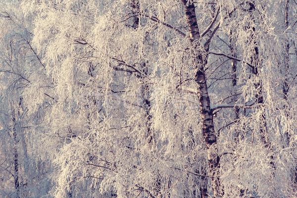 Hiver fantastique paysage Ukraine Europe beauté Photo stock © Leonidtit