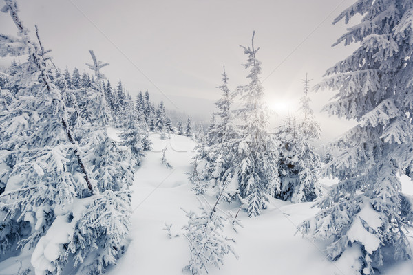 зима фантастический пейзаж парка Украина Европа Сток-фото © Leonidtit