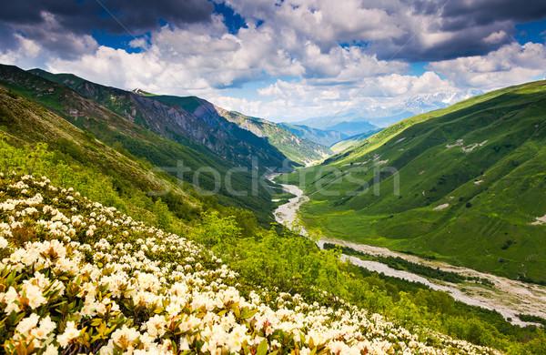 Virág gyönyörű kilátás alpesi mezők Grúzia Stock fotó © Leonidtit