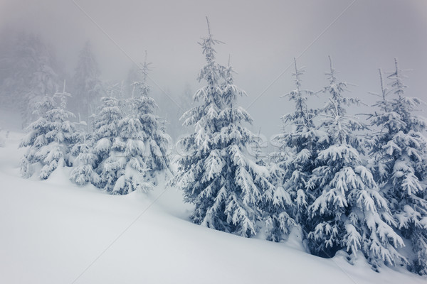 Inverno fantástico paisagem parque Ucrânia europa Foto stock © Leonidtit