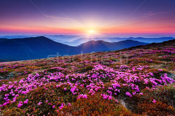 Hegyek tájkép mágikus rózsaszín virágok nyár Stock fotó © Leonidtit