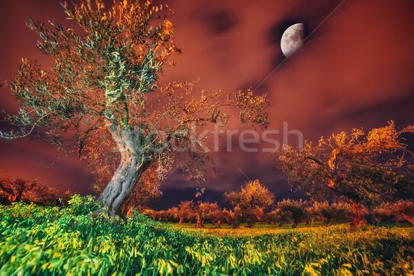 Oliwy ogród ciemne fantastyczny światło księżyca morze Śródziemne Zdjęcia stock © Leonidtit