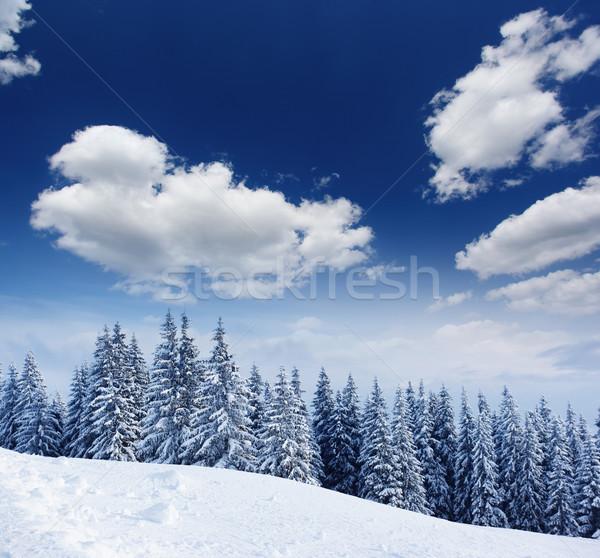 Tél gyönyörű tájkép hó fedett fák Stock fotó © Leonidtit