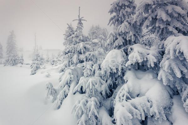 Tél fantasztikus tájkép park Ukrajna Európa Stock fotó © Leonidtit