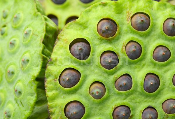 Lotus zaad peul water voedsel blad Stockfoto © leungchopan