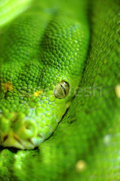 green snake Stock photo © leungchopan