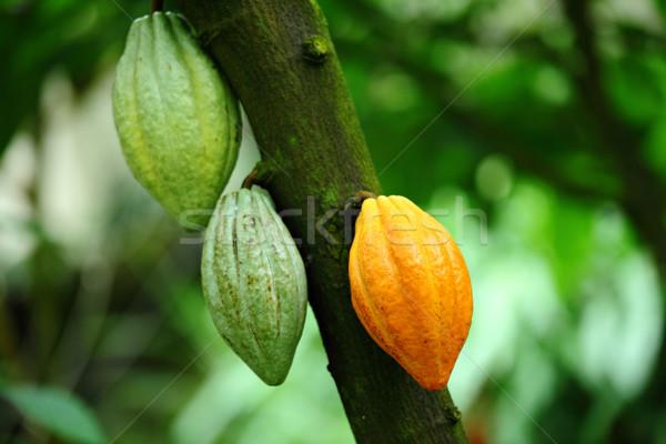 ポッド 食品 フルーツ チョコレート 工場 ジャングル ストックフォト © leungchopan