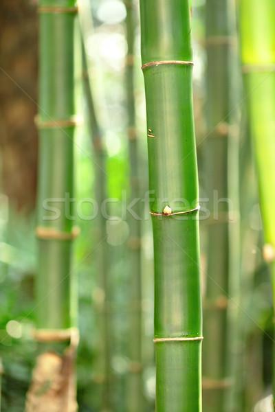 бамбук дерево древесины природы лист саду Сток-фото © leungchopan