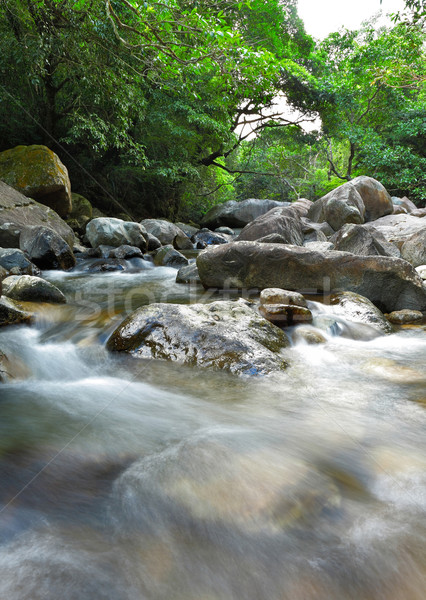 water in forest Stock photo © leungchopan