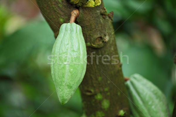 дерево продовольствие природы фрукты саду шоколадом Сток-фото © leungchopan