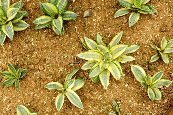 Design jardin fond désert vie couleur Photo stock © leungchopan
