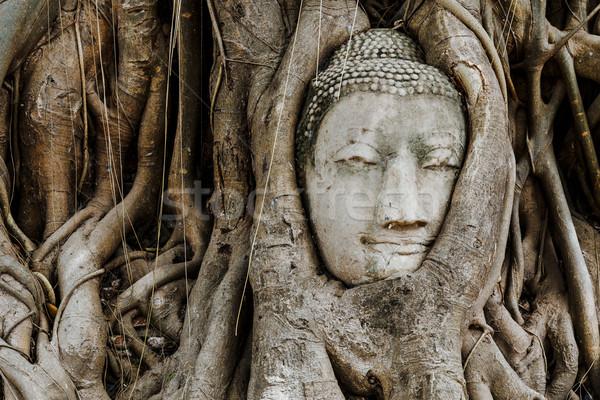 Head of Buddha in a tree trunk, Wat Mahathat Stock photo © leungchopan