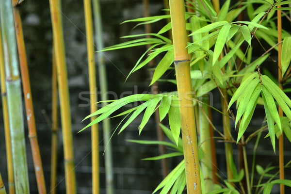 bamboo Stock photo © leungchopan