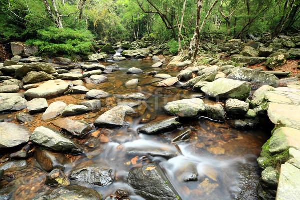 Сток-фото: воды · весны · лес · аннотация · пейзаж · стекла