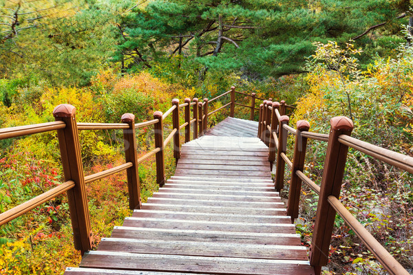 Wooden hiking path to the mountain Stock photo © leungchopan