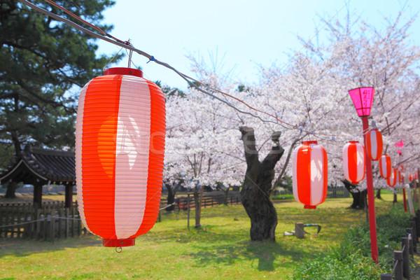 Japonês sakura lanterna natureza planta parque Foto stock © leungchopan