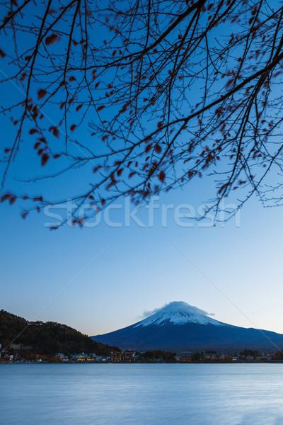 Dağ fuji ağaç kar göl bitki Stok fotoğraf © leungchopan