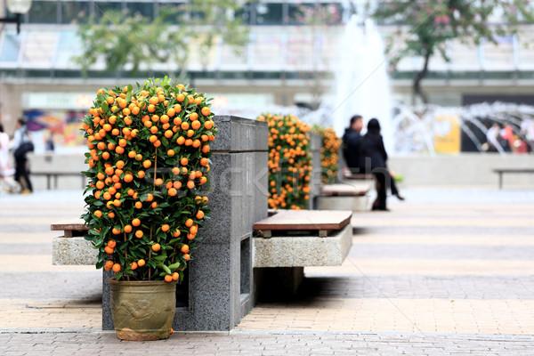 Chinese new year scene, kumquat in public area Stock photo © leungchopan