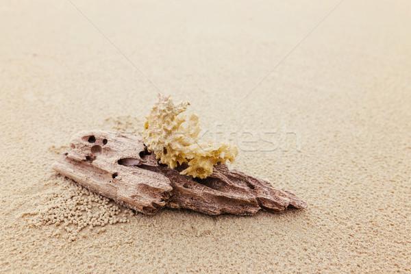 Driftwood koral plaży lata piasku relaks Zdjęcia stock © leungchopan