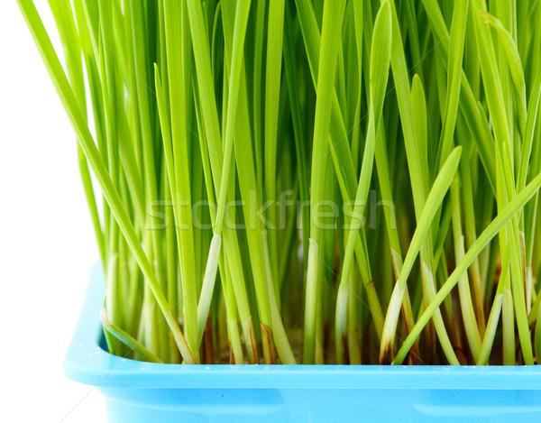 Wheatgrass close up Stock photo © leungchopan