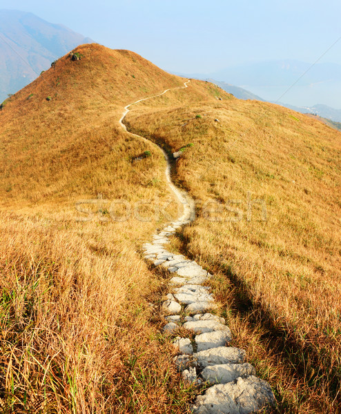 Hiking path Stock photo © leungchopan