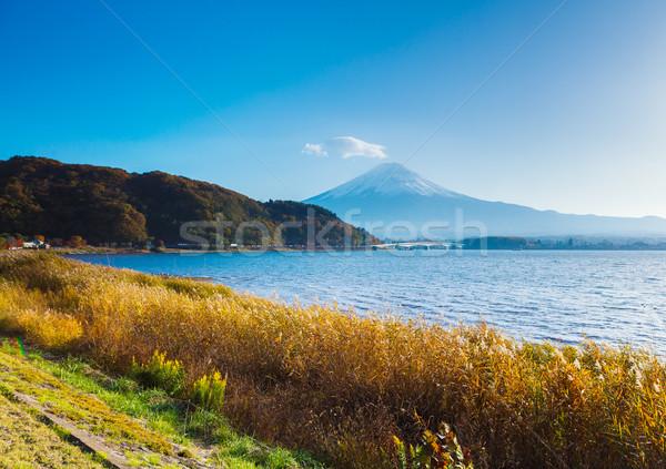Foto stock: Fuji · lago · jardim · montanha · rio · planta